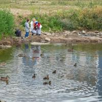 «У нас чисто там, где убирают»: пруд на Купревича может переломить равнодушие горожан к среде обитания