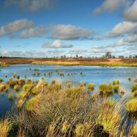 Ученые обеспокоены стремительным исчезновением водно-болотных экосистем