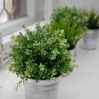 10 полезных комнатных растений: фильтруем воздух в квартире