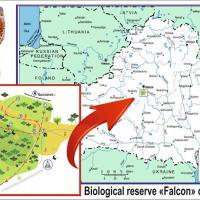 Новая экологическая тропа откроется в заказнике «Соколиный» в Мачулищах
