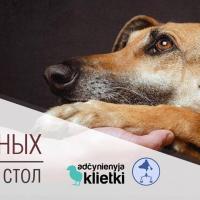 Круглый стол: Права животных в Беларуси