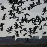 Беларусь присоединилась к охране афро-евразийских мигрирующих водно-болотных птиц