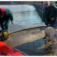 В Минске спасатель-водолаз спас собаку, упавшую в Комсомольское озеро