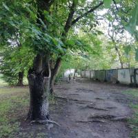 «Хотите увидеть дерево – выезжайте в лес за 100 километров». Жители Минска дошли до Министра, чтобы спасти деревья