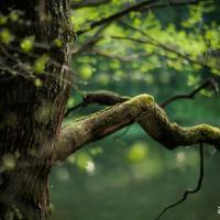 Могилёвские активисты просят придать Печерскому лесопарку статус особо охраняемой природной территории