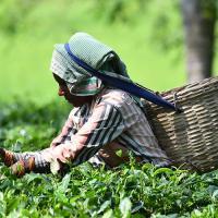 «Глобальное потепление снизит производительность труда»
