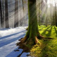 Как изменение климата отражается на Беларуси, и что думают об этом беларусы?