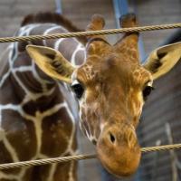 В Украине наложили эмбарго на выставки диких животных