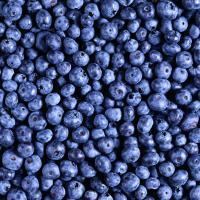 Заморозки скажутся на урожае ягод в Беларуси