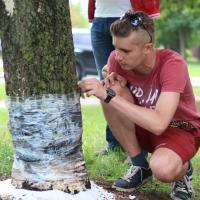 Фотофакт. Кто-то пытается убить дуб в Минске солью – милиция проводит проверку