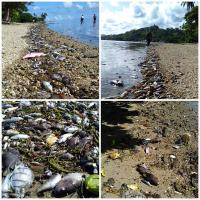 Побережье Фиджи засыпало мёртвой рыбой из-за аномальной жары
