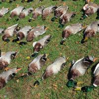 Увеличение сроков весенней охоты. Минприроды говорит, что оно тоже было против