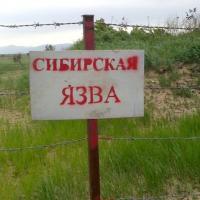 Вспышку сибирской язвы на Ямале вызвало изменение климата