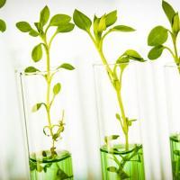 Как в лаборатории под Минском учёные клонируют лес