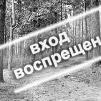 Запрет на посещение лесов введён в 5 районах Брестской области