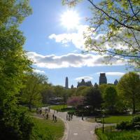 Как с помощью зелени перенести жару в городах? Рекомендации по благоустройству чиновникам и частные советы горожанам