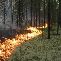 За первые три месяца в Беларуси произошло 12 лесных пожаров