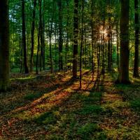 Новый Лесной кодекс поставит леса Беларуси под угрозу уничтожения