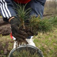 Во время акции «Неделя леса-2015» на Витебщине посадят более 3,5 тысячи гектаров леса