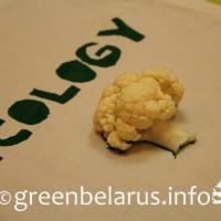 Green Bag: нет пластику, да - творчеству!