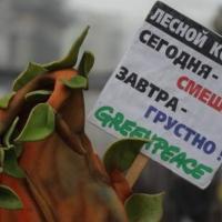 Эксперт «Гринпис»: «Лесной кодекс Беларуси в новой редакции станет первым шагом к хаосу и упадку»