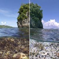 Прощайте, кораллы! Обнародован спецдоклад о глобальном потеплении