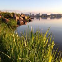 Защитить, а не протестовать: до 25 июля идёт обсуждение озеленения Минска