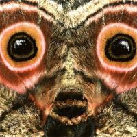 Обмануть, чтобы выжить. 10 примеров впечатляющей мимикрии в дикой природе