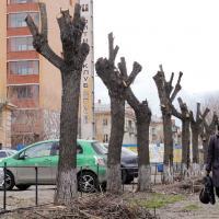 Соль на дорогах и отсутствие деревьев на проспектах. «Зеленстрой» ответил на наболевшие вопросы о зелени в Минске