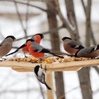 Лайфхак: делаем простые кормушки для птиц, пирог и шишку! (фото)
