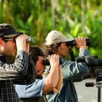 Ошибки бёрдвотчинга в России научат беларусов: как сделать наблюдения за птицами массовыми