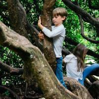 Как городская зелень влияет на умственное развитие детей
