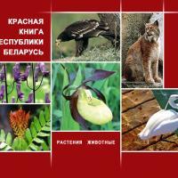 Издана новая Красная книга, посвящённая растениям