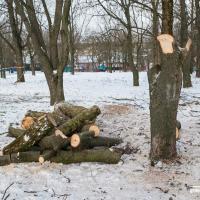 Зелёные зоны в Минске: сначала рубим, потом думаем?