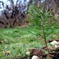 Восенню ў Беларусі пройдуць маштабныя пасадкі маладога лесу