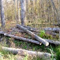 """Остается всего несколько дней, чтобы подписать петицию в защиту национального парка """"Припятский"""""""