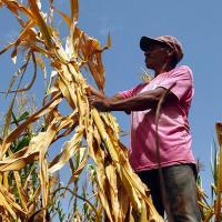 Правильное питание связали с предотвращением глобального потепления