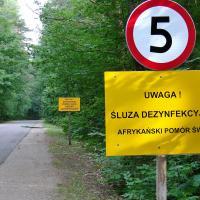 Польша считает, что Беларусь не борется с АЧС, и предлагает возвести забор