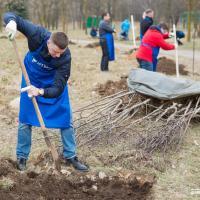 Деревья садят даже банки: в Минске заложили рябиновую аллею
