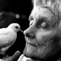 История из Швеции: как Астрид Линдгрен лоббировала жёсткий закон о защите животных