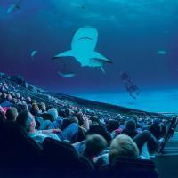 Кино на выходные: 5 фильмов на 8 минут о природе от «IMAX»