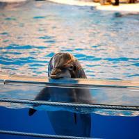 «Улыбка дельфина — это чушь. Они плачут, всем плевать!» Почему дельфинарии, словно газовые камеры для животных