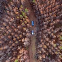 Испанский стартап обещает посадить 10 млрд деревьев с помощью дронов и «умных» семян