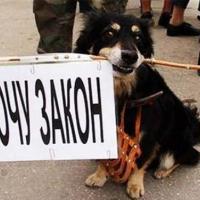 Законопроект «Об обращении с животными» вынесен на общественное обсуждение. Зоозащитники призывают высказываться!