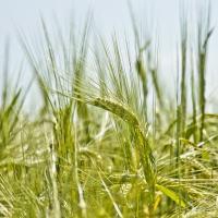 Как создать успешный органический бизнес? Советы украинских фермеров