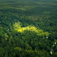 Для адаптации к изменениям климата в Беларуси будут увеличивать площадь лесов и восстанавливать торфяники