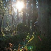 Вырубка продолжится: польскую часть Беловежи хотят лишить статуса ЮНЕСКО