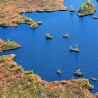 Топ-10 самых интересных беларусских болот
