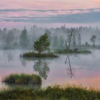 Три болотных маршрута по Беларуси
