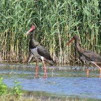 +2! В Беларуси появились новые Территории, важные для птиц